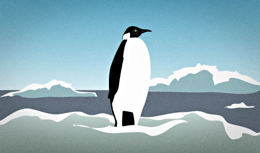 English Lesson: Penguins are remarkably well adapted to their icy environment, thanks to millions of years of evolution.