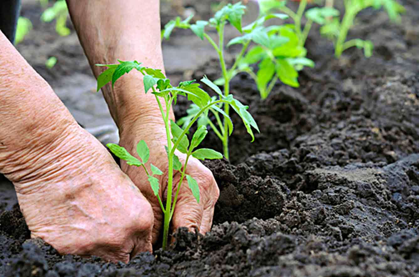 Do You Like To Garden Here Are Some Words And Phrases For Talking About Gardening In English